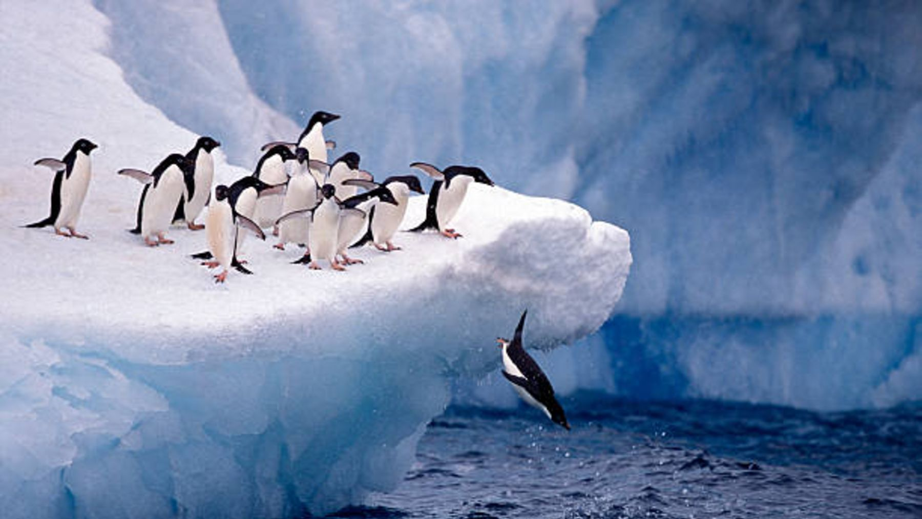 Descubre qué especies de animales son autóctonas de la Antártida