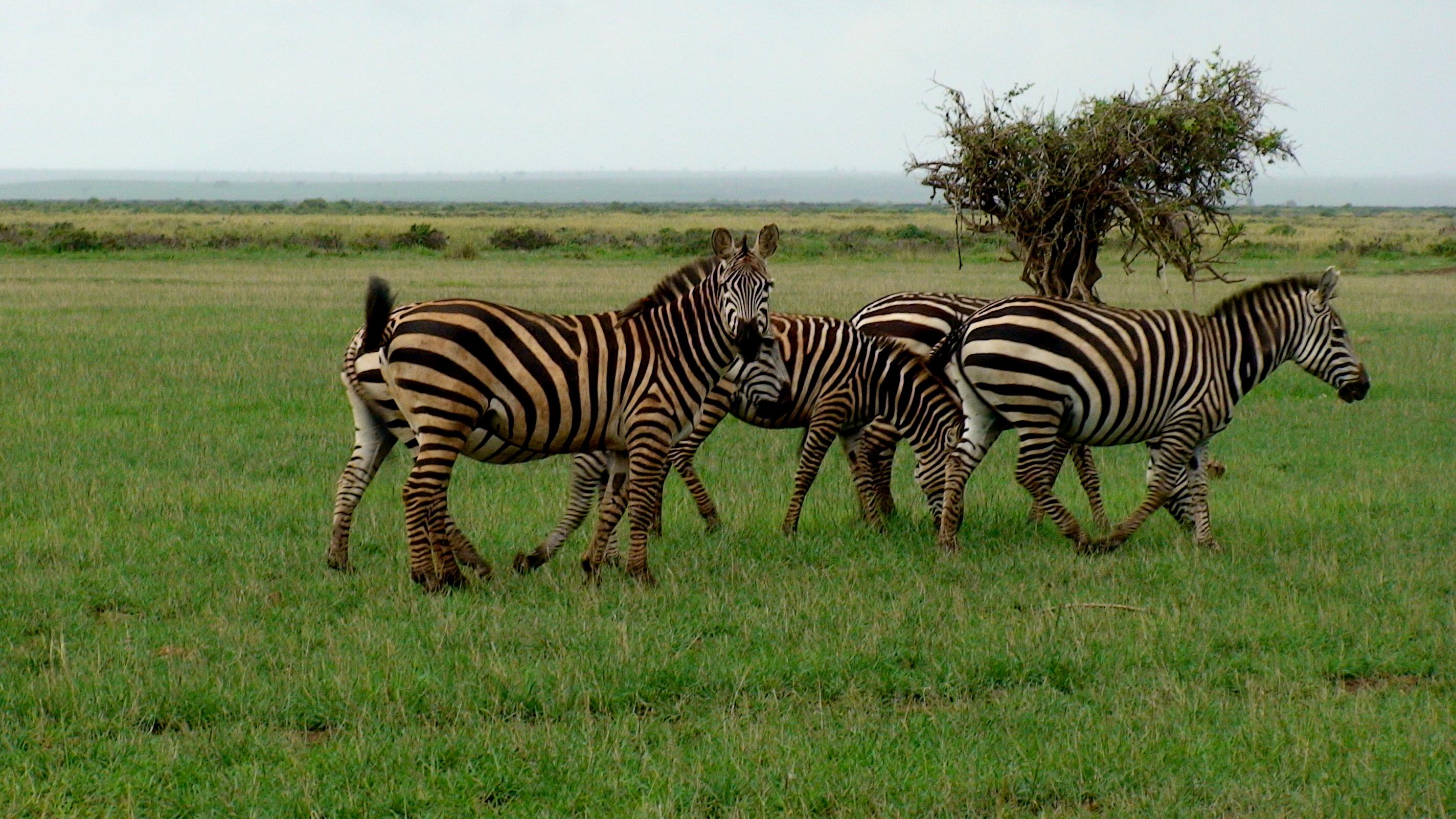 3 de marzo el Día Mundial de la Vida Silvestre, ¿sabes por qué?