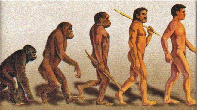 Origen del hombre: Teorías evolución