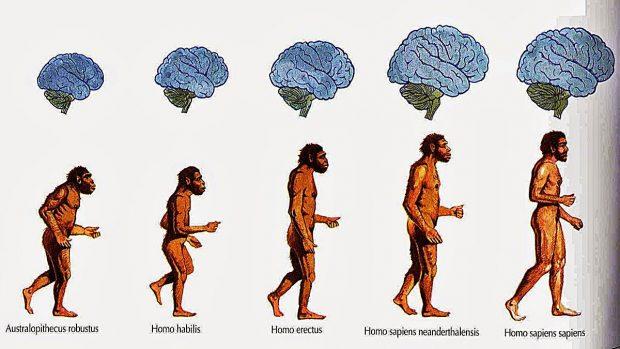 origen del hombre teorias evolución a