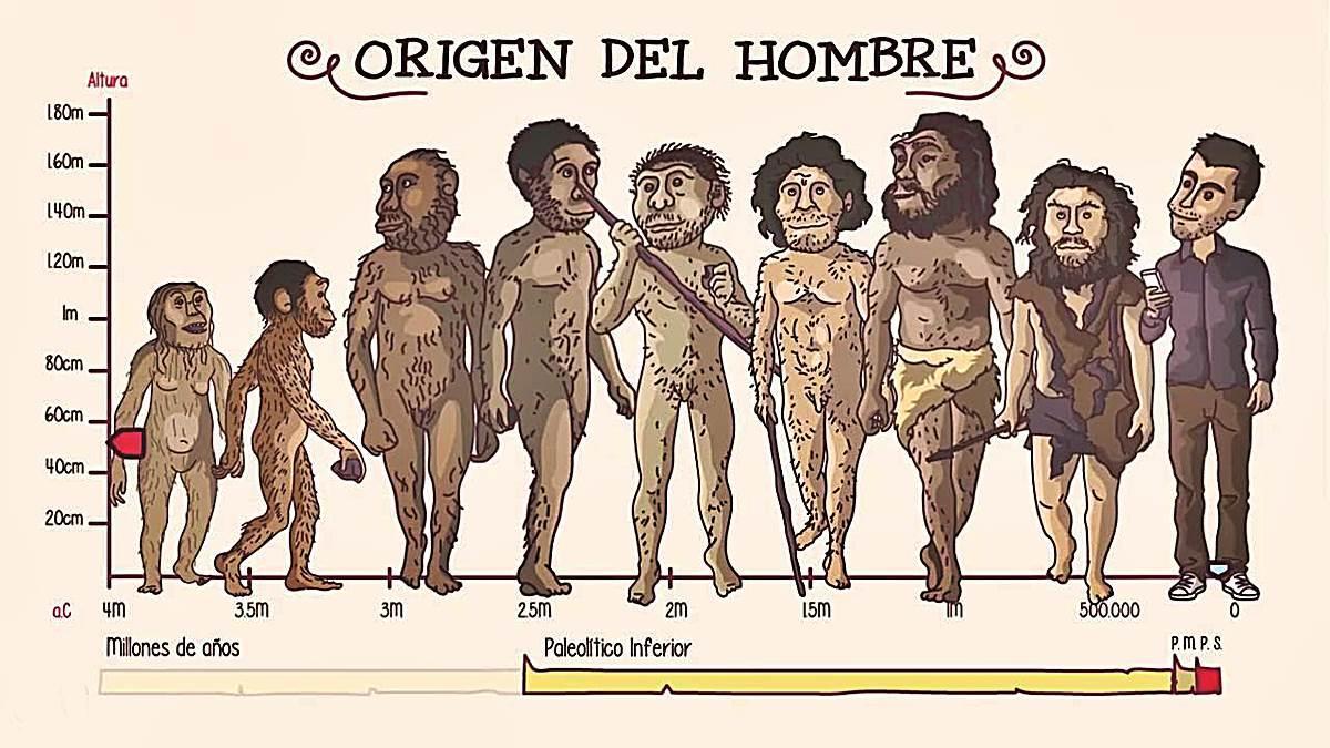 origen del hombre teorias evolución b