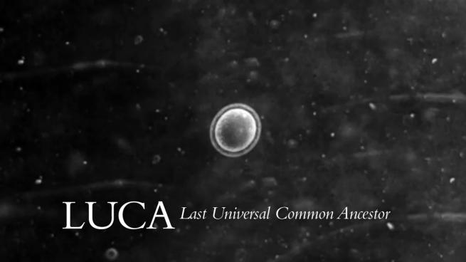 Origen de la vida: LUCA (last universal common ancestor)