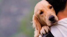 Trucos para identificar y tratar la sarna en perros