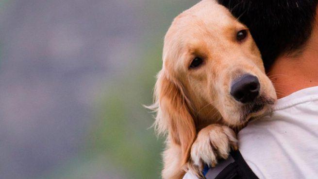 como puedo curar la sarna de mi perro