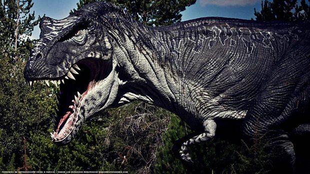 Nombres De Dinosaurios Carnivoros Los 5 Mas Temibles Dinosaurio carnívoro bípedo con un cuerpo, cabeza y cola enormes y. nombres de dinosaurios carnivoros los