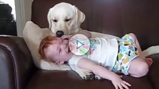 Los perros y los bebés nunca se han llevado tan bien.