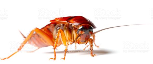 Insectos más feos del mundo