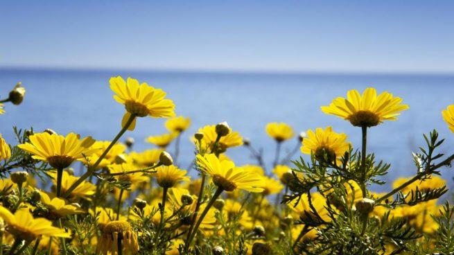 Resultado de imaxes para primavera