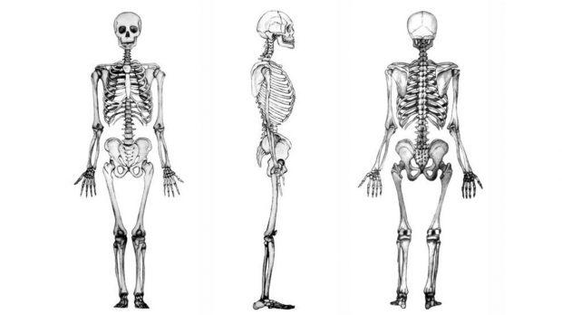 ¿Cuánto cuesta el cuerpo humano?