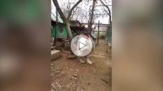 gallo-gigante