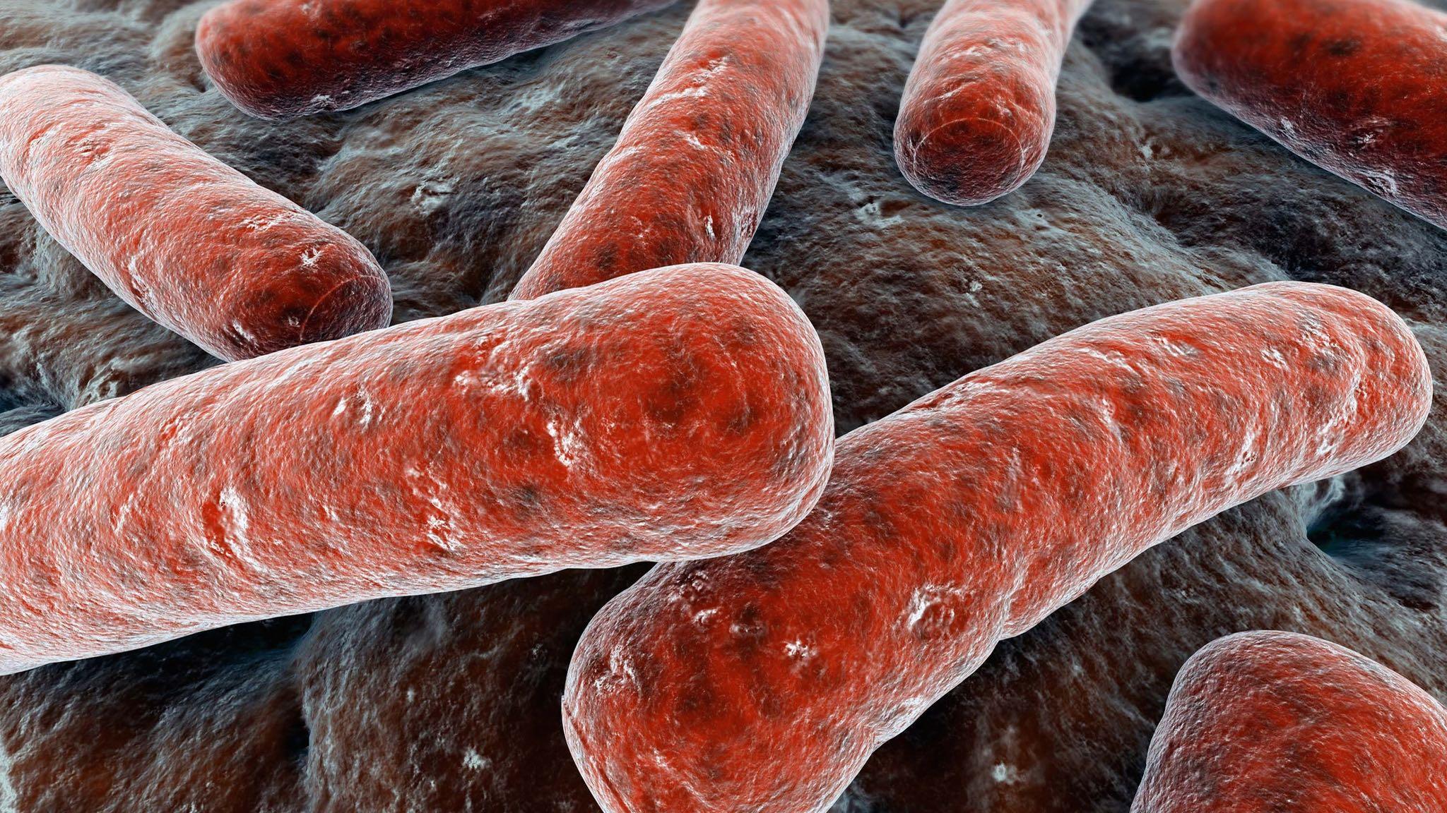 Día Mundial de la Tuberculosis información útil sobre la enfermedad