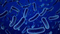 Todo lo que no sabías acerca de las bacterias