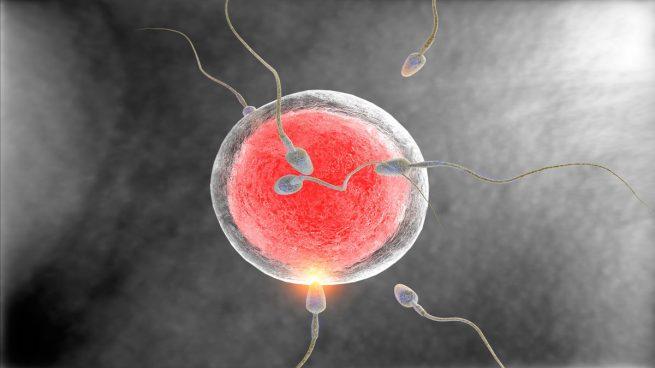 cuantos dias dura un espermatozoide en llegar al ovulo