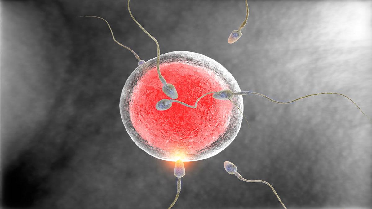 ¿Cuántos espermatozoides hay en una eyaculación?