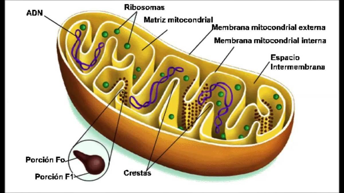 La Célula Y Las Estructuras Celulares Eucariotas Y Procariotas