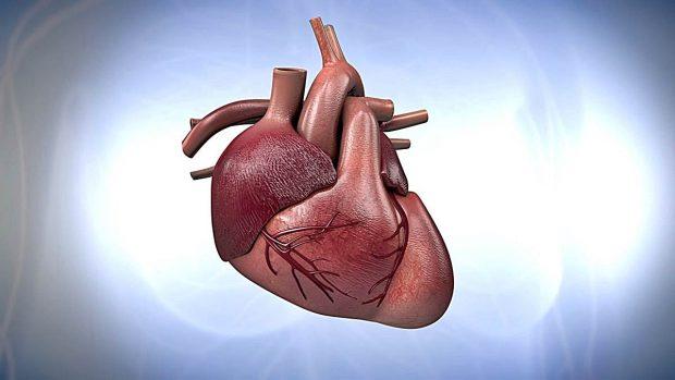 De paseo por el corazón humano: ¿cómo funciona?