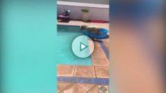 perro-piscina