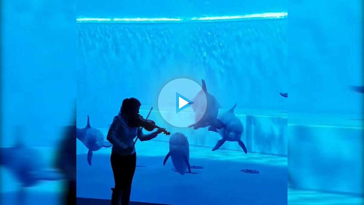 delfines play