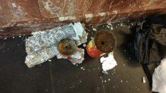 Artefacto casero halado en la estación de Metro de Ploshad Vosstaniya en San Petersburgo tras el atentado.