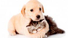 ¿Quién es más inteligente? ¿Tu perro o tu gato?