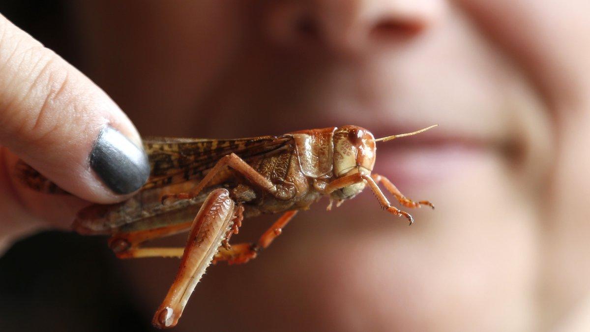 Cuántos insectos hay en el planeta