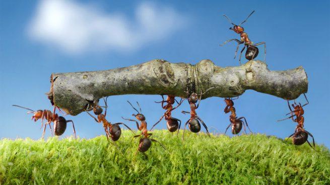 Cuántos insectos hay en el mundo