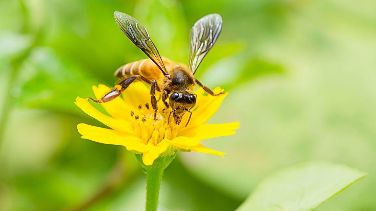 Cu ntos insectos hay en el mundo for Cuantos tipos de arboles hay en el mundo