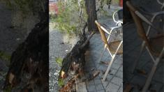 Caída de una rama en la calle Doctor Esquerdo.