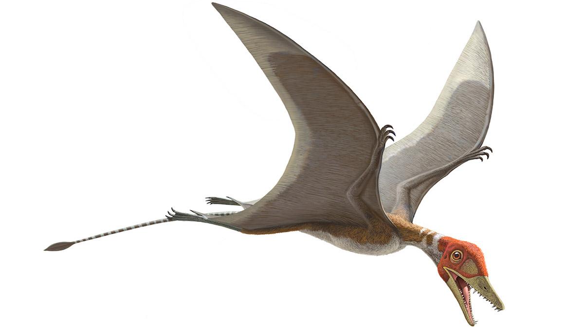 Dinosaurio Preondactylus