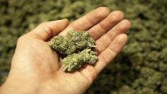 Marihuana, tercera droga más consumida
