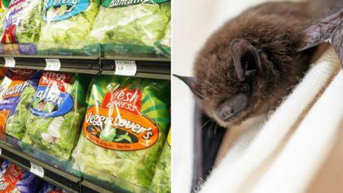 Un expositor de la cadena de supermercados Walmart donde se exponen distintas ensaladas envasadas de la marca en la que se han descubierto murciélagos muertos.