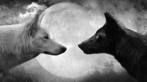 5 fascinantes curiosidades sobre los lobos