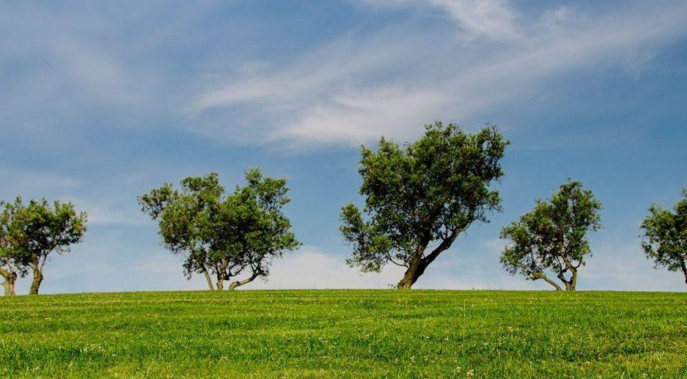 Bonos verdes Foto: Istock