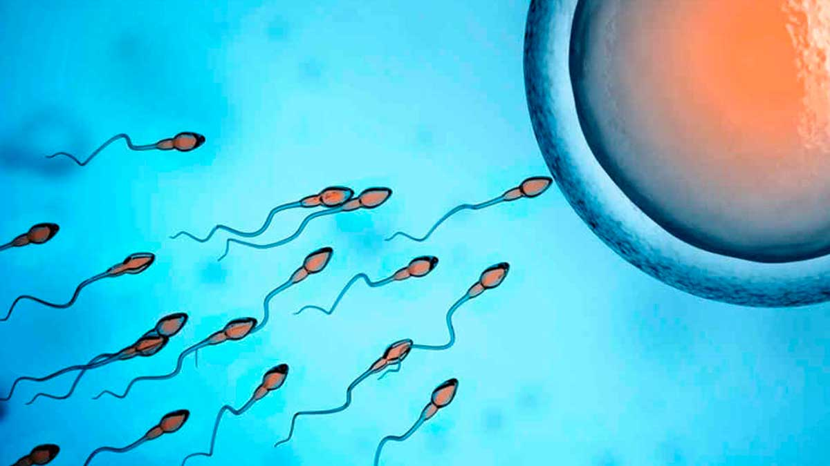 Espermatozoides fecundando un óvulo.