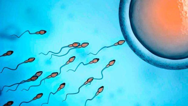 curiosidades semen espermatozoides