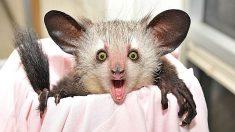5 de los animales más raros que existen