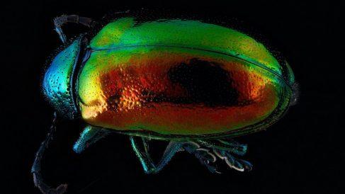Descubre cuál es el insecto más fuerte del mundo