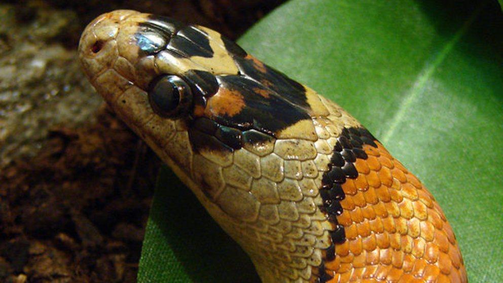 Descubre las 5 serpientes más increíbles del mundo