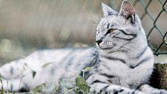 5 sorprendentes mitos sobre los gatos