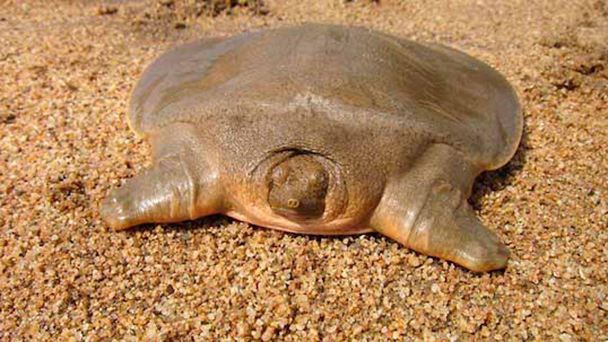 La tortuga más extraña que habías visto jamás