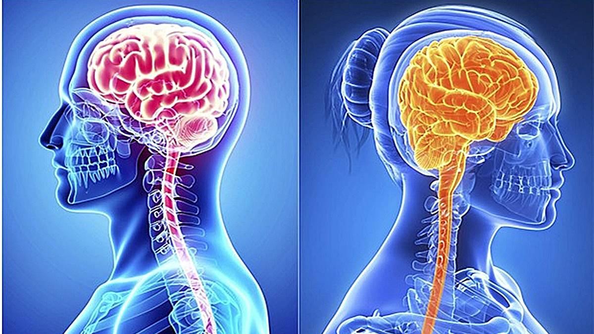 5 diferencias entre el cerebro masculino y femenino