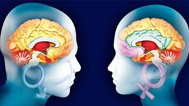 cerebro diferencias hombre mujer