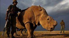 Sudan está custodiado las 24 – Natrional Geographic