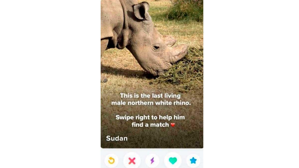 Rinoceronte blanco del norte en Tinder