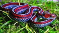 Las 5 serpientes más increíbles del mundo