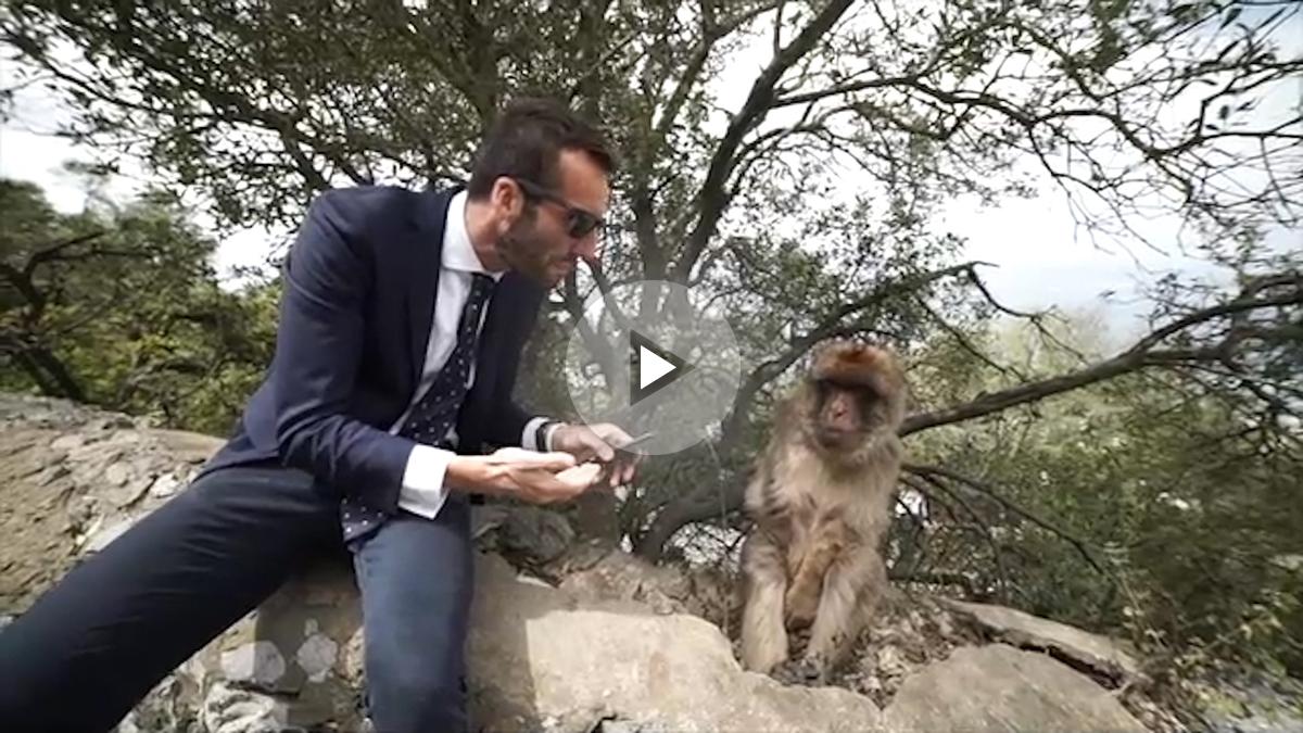 Álvaro Ojeda le canta a los monos por bulerías para decirles que son españoles