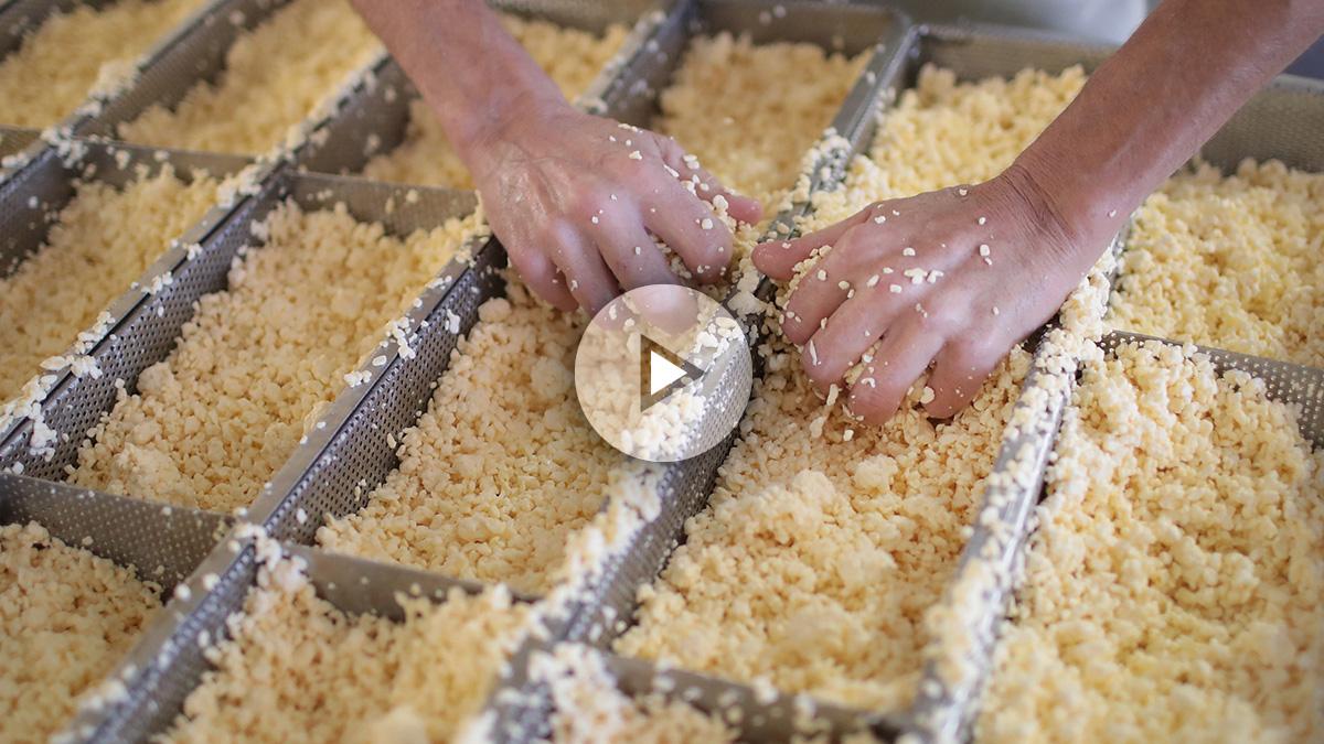 El queso m s tradicional de italia elaborado por larvas y for Larvas de polillas en el techo