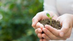 5 sencillos pasos para ayudar a salvar nuestro planeta