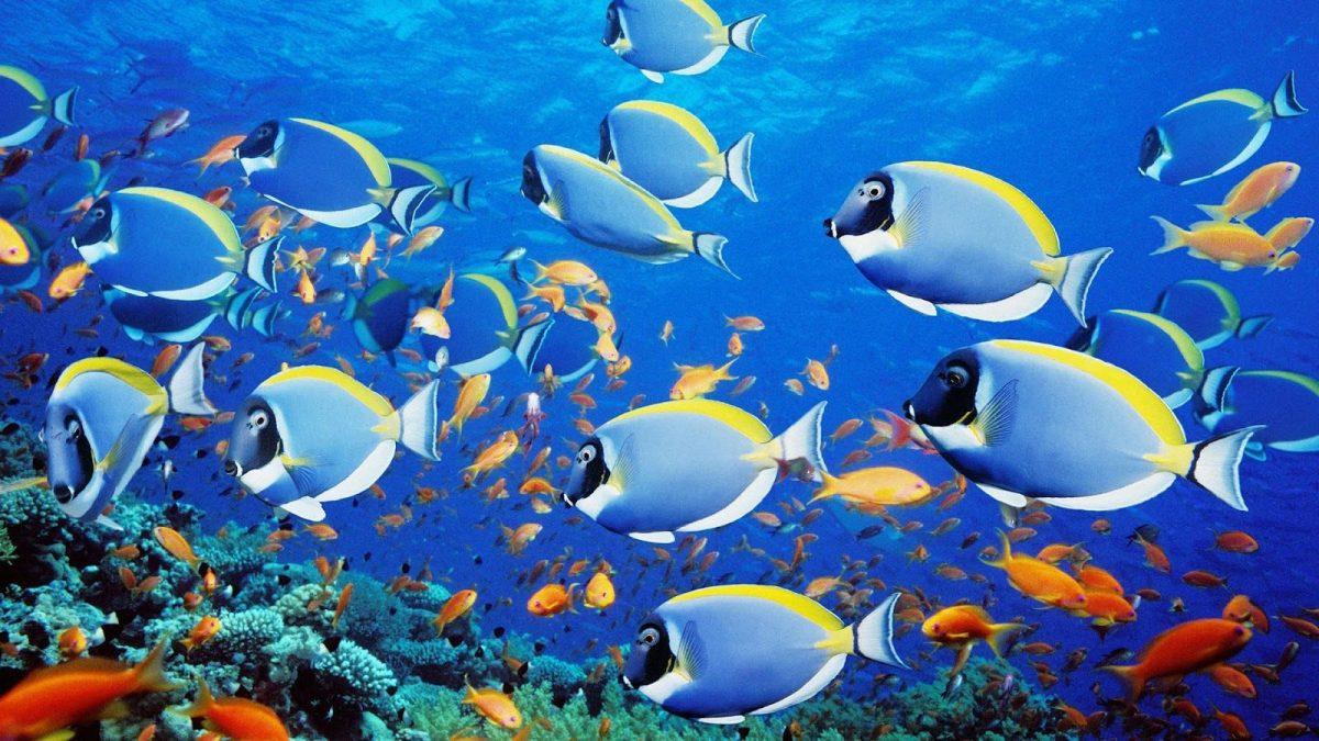 C mo respiran los peces bajo el agua for Imagenes de jardines exoticos