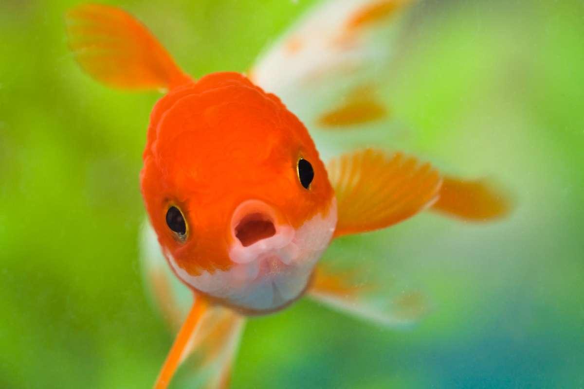 ¿Cómo respiran los peces bajo el agua?